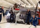 Video: Bolts ātrākais arī bezsvara stāvoklī
