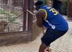 Video: Kultūrists un lauvene sacenšas virves vilkšanā