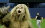 Video: Briesmonis uzdarbojas beisbola treniņā