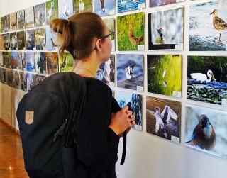 Dabas muzejs izsludina putnu fotogrāfiju konkursu