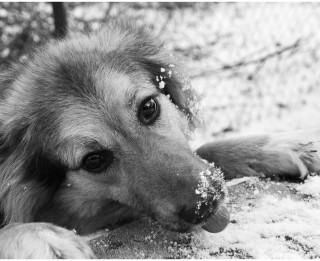 Dzīvnieka acis esot tik patiesas kā atvērta grāmata