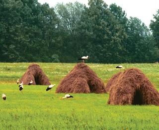 Kādas sekas tuvāko 30 gadu laikā klimata pārmaiņu dēļ izjutīs Latvija