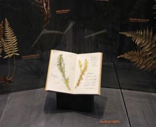 Lieldienu nedēļā  Dabas muzejā aicina izzināt  pavasara augus un  sēnes, mežus, purvus un pļavas