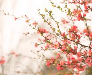Tava vārda skaidrojums un ietekme uz tavu likteni. 20. aprīlis - Mirta, Ziedīte