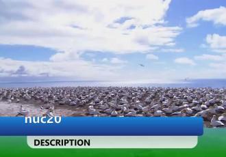 Tiešraide: Svētdien 14:00 Latvijas-Igaunijas sieviešu basketbola līga: Vega1/Liepāja - Audentes SG/Noortekoondis