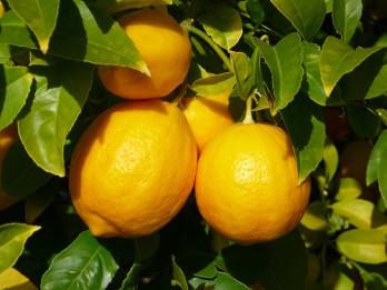 Citroni skaistumam un veselībai