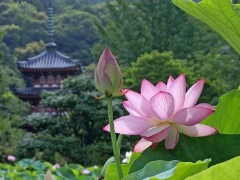 Desmit maģiski ziedi, kas harmonizē, nomāc stresu un aizsargā