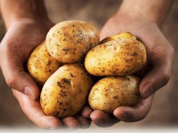 Derīgi padomi, gatavojot kartupeļus