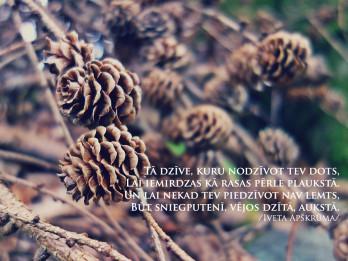 Tava vārda skaidrojums (nozīme) un ietekme uz tavu likteni. 12. decembris - Iveta, Otīlija