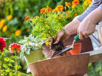 Dārza pārvērtības – ātri un vienkārši veidi, kā uzlabot dārza estētiku