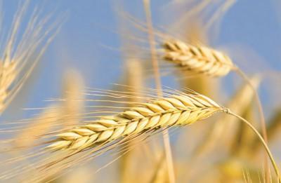 Apgāda ZVAIGZNE ABC grāmatu jaunums: Bībele un bizness – kas tos saista?