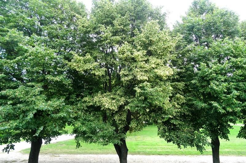 """Saudzē dabu, """"necērt"""" kokus - taupi papīru birojā!"""