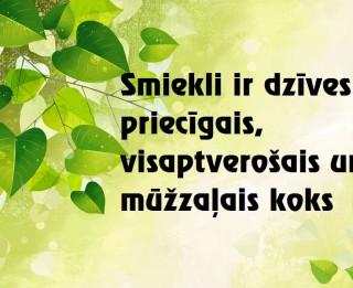 Foto: Smiekli ir dzīves priecīgais, visaptverošais un mūžzaļais koks