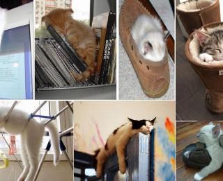 Foto: Var gulēt arī tā. Neticamākās un smieklīgākās kaķu gulēšanas pozas