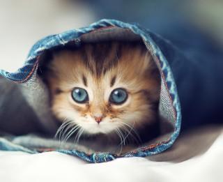 Foto: Mēs viņus mīlam un viņi bez mums nevar. 20 burvīgi kaķu foto