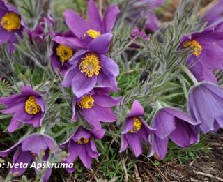 Foto: Kur paslēpies pavasaris. 30 foto