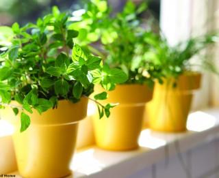 Lai ziemā netrūktu vitamīnu. Mini dārziņš uz palodzes