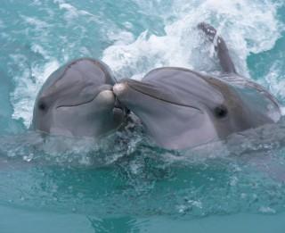 25 interesanti fakti par delfīniem- fantastiskākajiem šīs zemes iemītniekiem